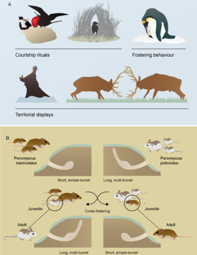 Different innate behaviours in the animal kingdom